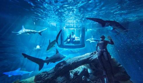 Airbnb, una noche con tiburones