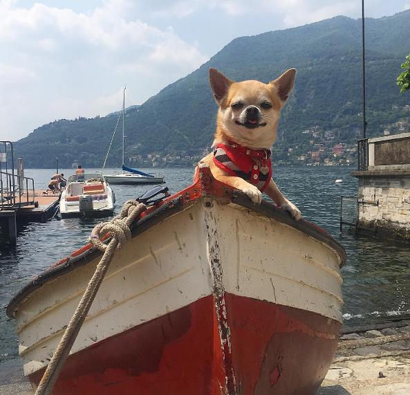 https://www.instagram.com/miami_traveller_dog/