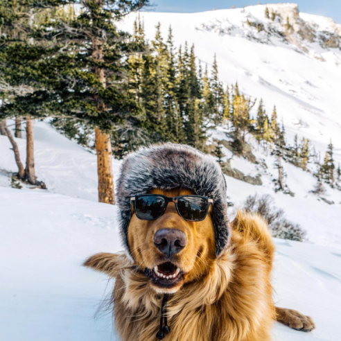 https://www.instagram.com/aspenthemountainpup/