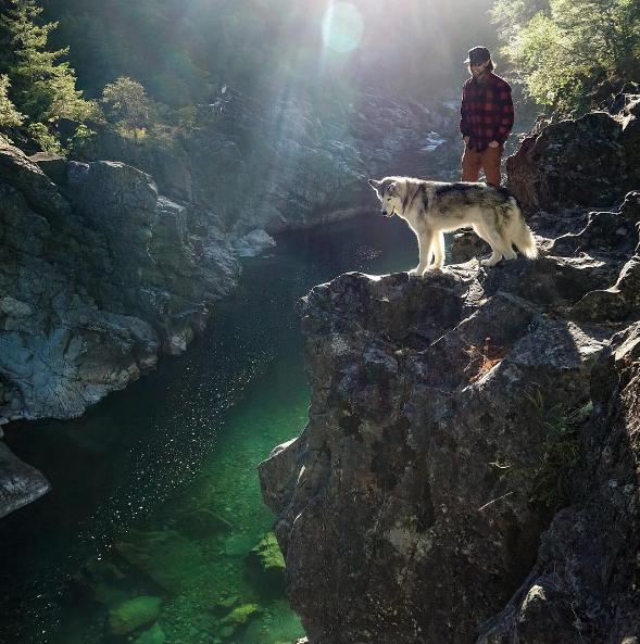 https://www.instagram.com/loki_the_wolfdog/