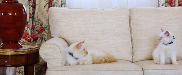 Los gatos de Le Bristol